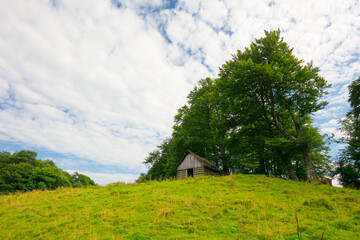 Wall Mural - tree on the hill in green mountain landscape. beautiful nature scenery with grass on the meadow rolling in to the distance. fresh morning weather with clouds on the blue sky