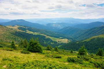 Wall Mural - summer landscape of valley in mountains. trees and green meadows on rolling hills. black ridge in the distance. beautiful nature of carpathians. cloudy sky