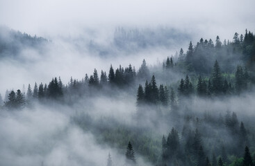 Foggy forest in the mountains. Landscape with trees and mist. Landscape after rain. A view for the background. Nature - image