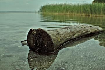 Fototapeta Belka drzewa na jeziorze.  obraz