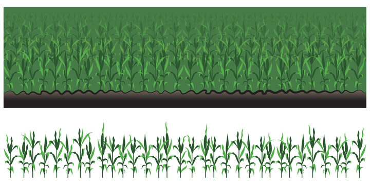 Corn Field Seamless Vector Border