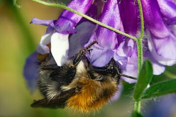 Blütenpracht ganz nah in Makro mit Bienen beim Bestäuben
