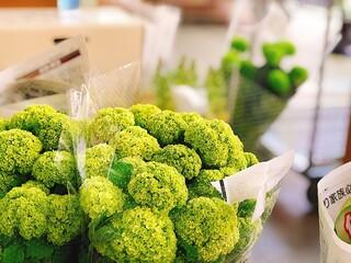 緑色のあじさいの花