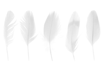 Wall Mural - Beautiful collection sketching white feather isolated on white background