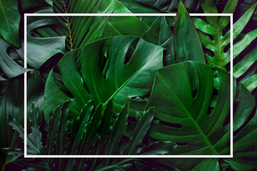 Wall Mural - closeup nature view of tropical green monstera leaf background with white frame, Flat lay, fresh wallpaper banner concept