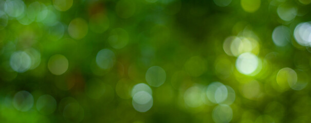 Wall Mural - abstract circular green bokeh background, green nature spring and nature light in blurred style, copy space