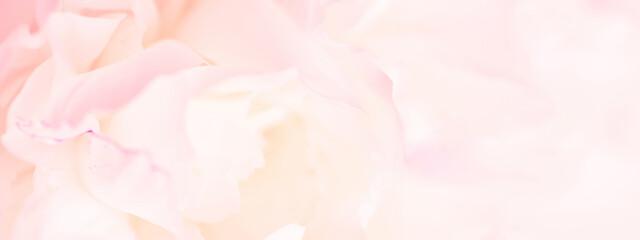 Fototapeta Tender light pink banner of fresh peony petals