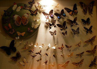 A collection of rare exotic butterflies in warm sunlight background.
