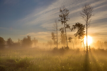 Foto op Canvas Grijs Sunrise in the foggy forest, Altai, Russia