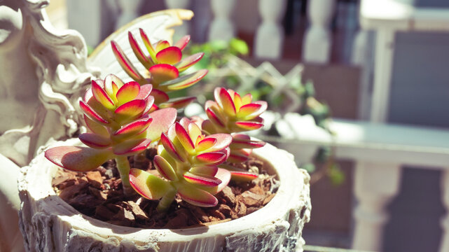 Small and tiny succulent plants in pot home garden on sunlight. High quality photo