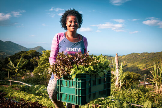 Portrait of proud organic farmer woman from a quilombola community harvesting vegetables. Bio food gathering in a sunny day and blue sky.