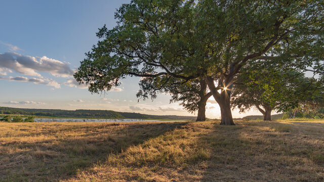 Oak tree in field by Lake Georgetown, in Georgetown, TX
