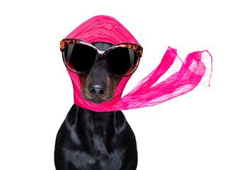 Keuken foto achterwand Crazy dog diva chic dog