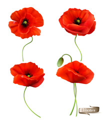 Big Set of a Red Poppy isolated on white background. 3d Realistic Vector