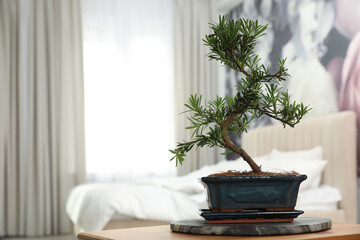 Foto op Canvas Bonsai Japanese bonsai plant on table in bedroom, space for text. Creating zen atmosphere at home