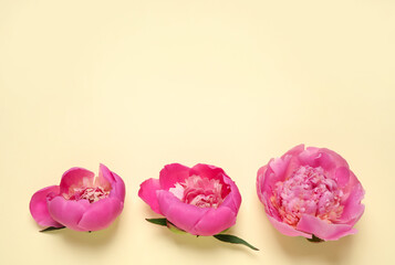 Beautiful pink peonies on yellow background, flat lay. Space for text