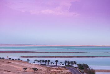 Fototapete - Dead Sea in the morning. Palm trees on the beach. Beautiful sea nature landscape. Israel