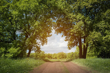 Summer landscape. Dirt road and oak trees. Arch.