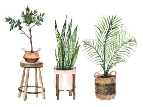 Watercolor set with indoor plants in pots on a white background