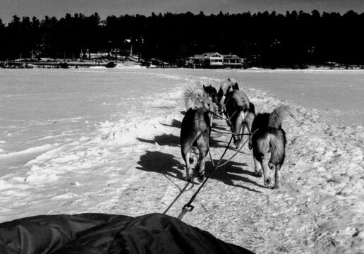 View from behind a group of dogs pulling a sled in the snow