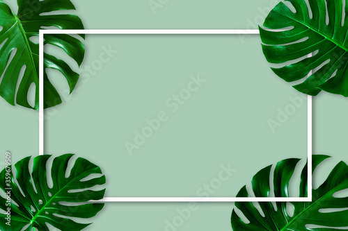 Wall mural Natural green monstera leaf with white frame on pastel green background, nature background
