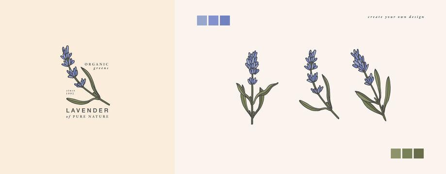 Vector illustration lavender branch - vintage engraved style. Logo composition in retro botanical style.