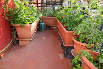 urban garden for the cultivation of vegetables inside flower pot