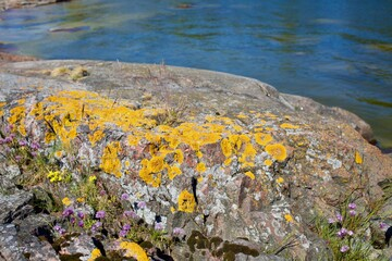 Cliffs and vegetation by in NOrdic archipelago