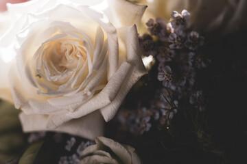 Fototapeta White rose in bouquet