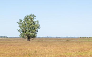 Einzelner Baum in offener Landschaft im Havelland bei Gülpe, Deutschland
