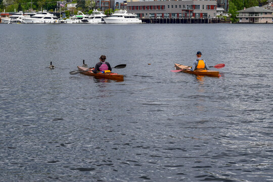 A couple is kayaking in separate kayaks in Lake Union in Seattle and a pair of geese swim ahead of the couple.