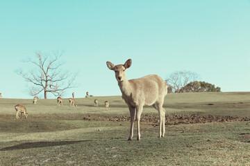 奈良公園-鹿-2020年6月
