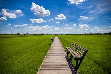 Fotobehang Rijstvelden Green Terraced Rice Field in Nakhon Pathom, Thailand. Tourism of Rice field in summer on 21 June 2020