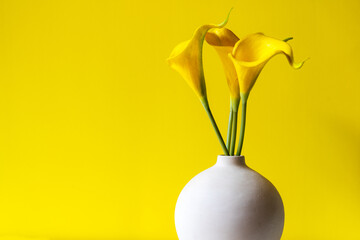 Yellow wall with lily flower, copy space for text. Still life and Lifestyle Concept