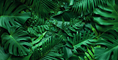 closeup nature view of tropical green monstera leaf and palms background. Flat lay, fresh wallpaper...