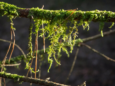 Germany, Mossy branchesÔøΩin Upper Palatinate Forest