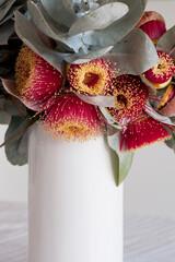 White vase of eucalyptus macrocarpa flowers and leaves