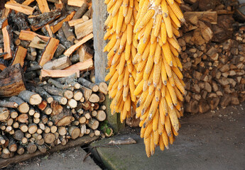 Corn cobs to feed livestock and pine firewood stored for the winter in a house in Laza, village at the province of Ourense, Galicia, Spain