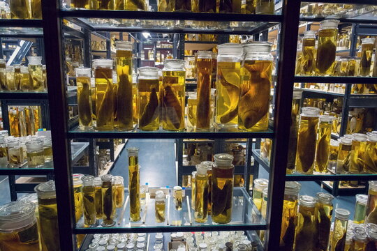 Shelves with various animals preserved in formaldehyde solution