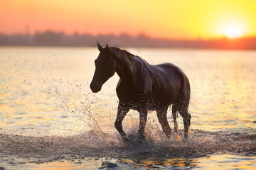Wall Mural - Black horse silhouette at sunset in water