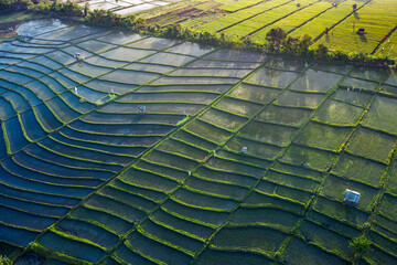 Fotobehang Rijstvelden Aerial view taken by drone and directly above of some rice terraced paddy fields in Bali Indonesia forming amazing shapes and lines
