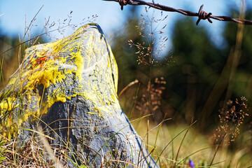 Kamień znacznik w polu