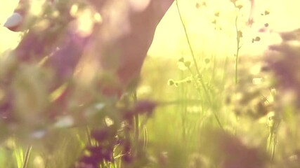 Fotoväggar - Young woman hand running through wild meadow field. Female hand touching wild flowers closeup. Summertime concept. Enjoying nature. Healthy lifestyle. Slow motion footage 240 fps. 4K UHD