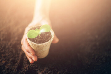 Hand holding potted seedlings growing in biodegradable pots over soil background with copy space. Banner. Agriculture, organic gardening, planting or ecology concept. Young sprouts. New life concept