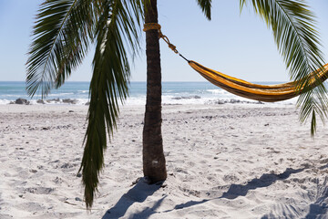 Magnificent view of a beach with a palm tree and a hammock tied to it