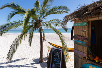 Magnificent view of a beach with a palm tree and a surf shop