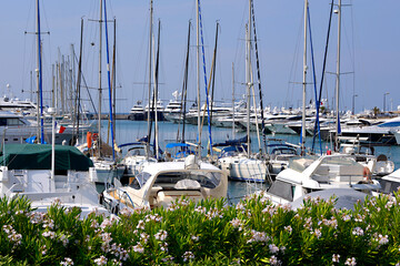 Harbor with rosebay in the foreground at Cannes in France, a city located on the French Riviera in the Alpes-Maritimes department