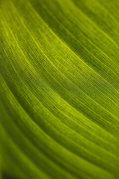 Macro shot of fresh green leaf