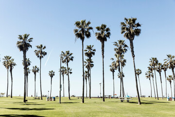 Palm trees growing on grassy field against sky
