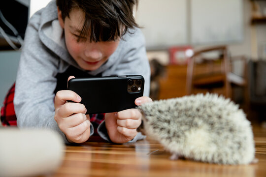 Boy photographing hedgehog